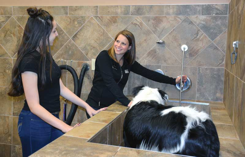 Becoming pet experts with pet valu canadian business our self serve dog wash has become a bit hit with customers solutioingenieria Choice Image