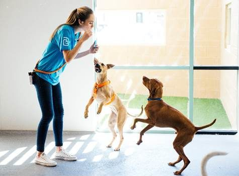Dogtopia plans to open 15 new locations in the next 24 months.