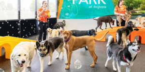 On the heels of steady growth in Ontario, Dogtopia has announced plans to expand into western Canada.